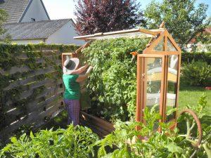 Warum ein Tomatenhaus? Vorteile eines Tomatenhauses
