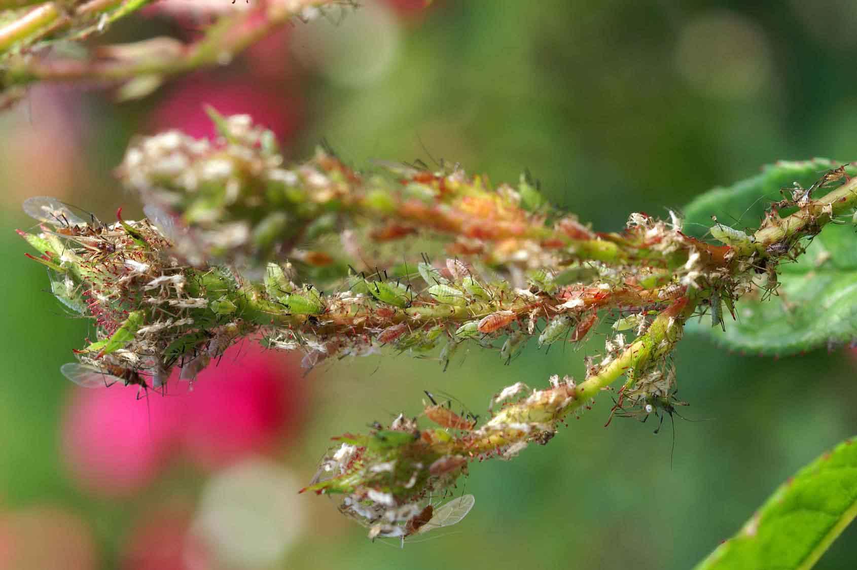 Nützliche gegen Schädlinge