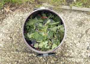 Pflanzen düngen Pflanzen: Tee, Brühe oder Jauche