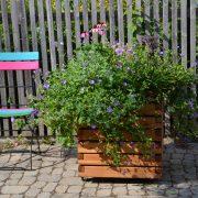 pflanzkasten-kubio-60x60x60-mit-dauerbeflanzung-juli-2015