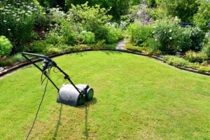 Sattgrüner Rasen im gesamten Gartenjahr – aber wie?
