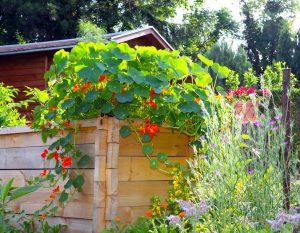 Holzhochbeet – pflegen vorm Winter
