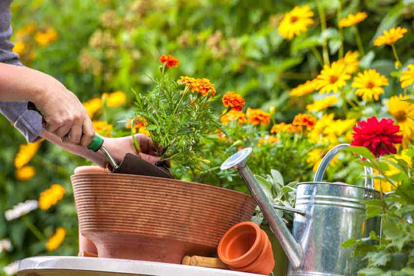 Blumen garten  Strauch- und Blumengarten - Gartenfrosch Ratgeber