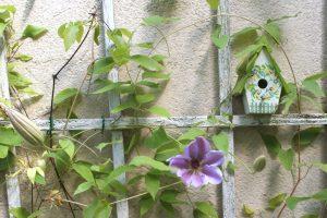 KLetterpflanzen im Garten