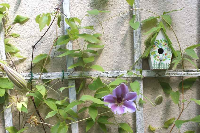 Klettergerüst Für Pflanzen : Pflanzkasten mit rankgitter gartenfrosch ratgeber