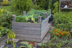 Wie kann man mit einem Hochbeet einen Garten gestalten?