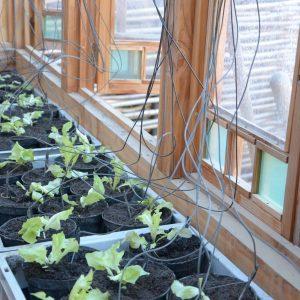 Pflanzkastenbewässerung wie in Gärtnereien mittels nahezu unsichtbarem Schlauch