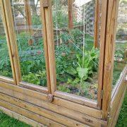 junge Tomatenstauden im Tomatenhaus