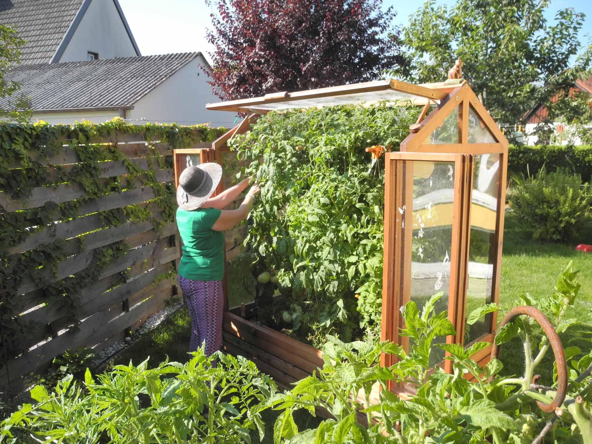 warum ein tomatenhaus vorteile des kleingew chshauses. Black Bedroom Furniture Sets. Home Design Ideas