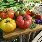 verschiedenste Tomaten, rot, gelb, rosa und grün