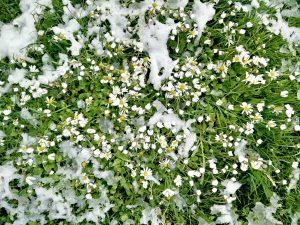 Wintereinbruch – Kerzen als Frühbeetheizung