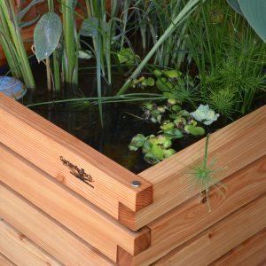 Miniteich von Gartenfrosch