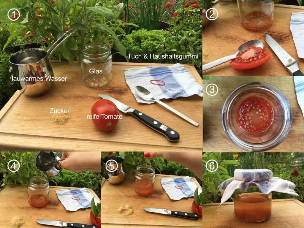 Tomaten-Saatgut-selbst-gewinnen-col