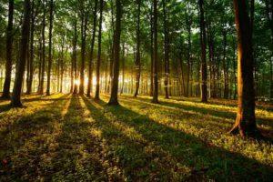 Holz, ein Baustoff mit Tradition