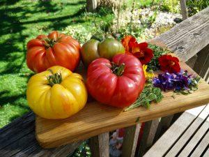 leckere Tomaten in voller Reife
