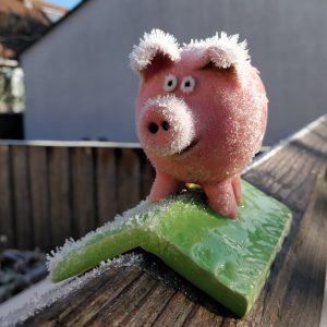 Frostborsten Schwein