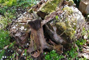 Totholz im Garten ist wichtig